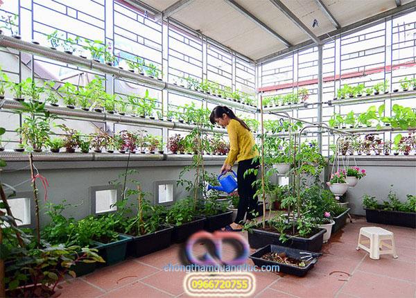 chống thấm sân thượng trồng rau